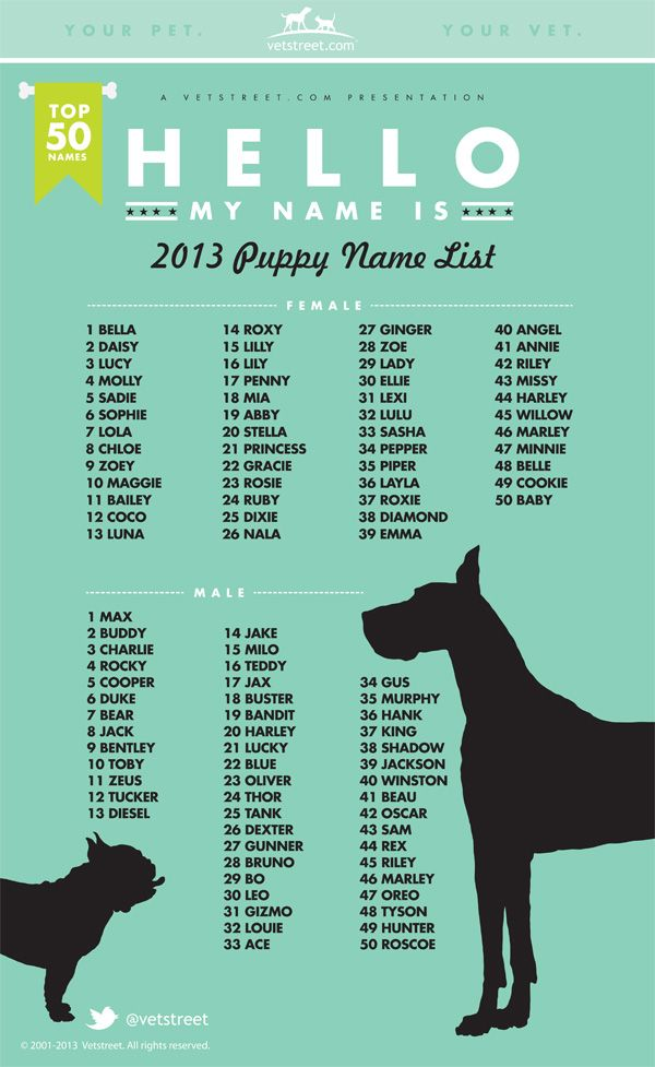 Most Popular Dog Names 2013