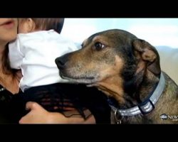 Adopted Family Dog Saves Dying Baby