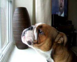 Bulldog Sings to Italian Opera!