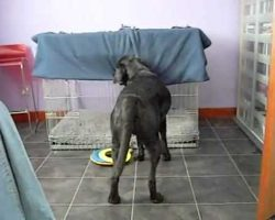 Dog Puts Himself To Bed