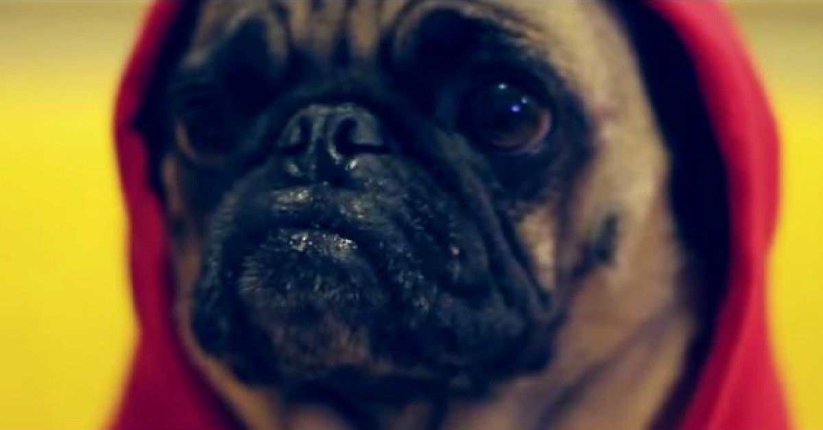 Eminem – Rap God (Unofficial Pug Version)