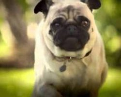 Dorito's Pug Attack – One of All-Time Favorite Super Bowl Commercials