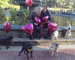 Pug Proposal: Cutest Marriage Proposal EVER?!