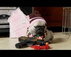 Pug Puppy Reenacts Movie 'Home Alone' [DISGUSTINGLY CUTE]