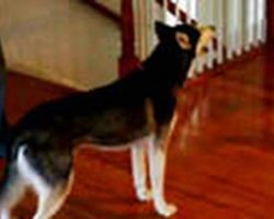This Clever Dog Is Asked If She's Stupid. Her Reply? Hysterical!