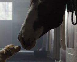 This Super Bowl TV Commercial From Budweiser Will Probably Make You Cry