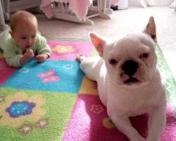 French Bulldog Teaches Baby To Crawl