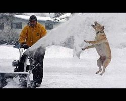 Funny Dogs And Cats Playing In Snow