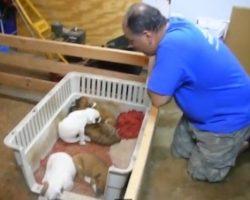 Man Sings Puppies To Sleep!