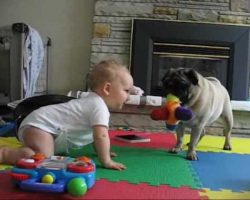 Pug vs Baby – The Neverending Battle