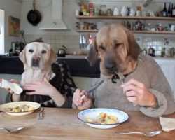 Can't Stop Laughing Watching These Two Dogs Dining In a Busy Restaurant!