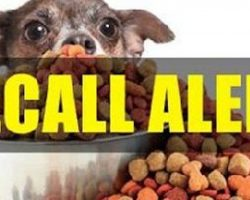 [RECALL ALERT] Pro-Pet LLC Dog and Cat Foods Recalled for Salmonella