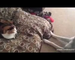 Cats Stealing Dogs' Beds: Compilation