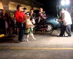It's All In The Hips! Merengue-Dancing Dog Makes The Perfect Ballroom Partner