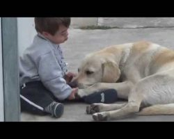 Gentle Labrador Befriends Little Boy With Down Syndrome, Melts Our Hearts