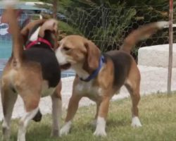 Beagles See Light of Day for the First Time After a Life in a Laboratory