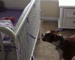 Bella the Boxer Won't Let Melina the Newborn Baby Cry Alone.. Such a Sweet Reaction..
