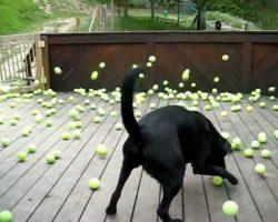 Dog's Dream Comes True!