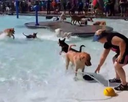 Before The City Pool Closes For The Year, They Open It To Dogs! What A Great Idea!!
