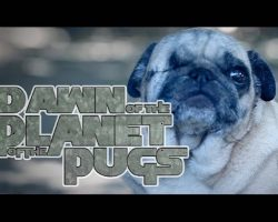 Dawn Of The Planet Of The Apes [Pug Puppy Edition]