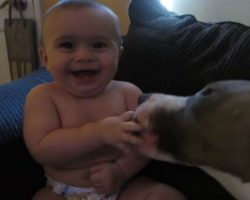 [VIDEO] Gentle Pit Bull Puppy + Sweet Baby = Cute Outcome!