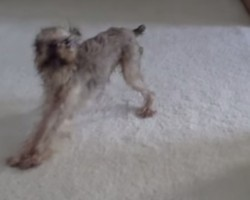 Dog Gets Upset After Being Bathed. And It's HILARIOUS!!