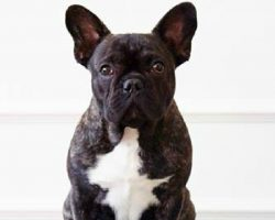 21 Adorable Advice From French Bulldogs