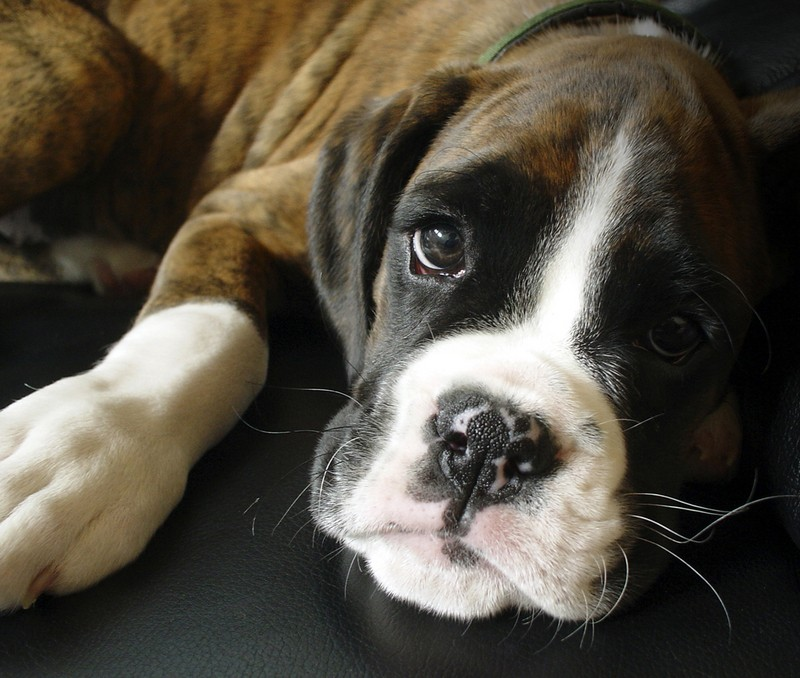 15 Facts You Probably Didn't Know About Boxers