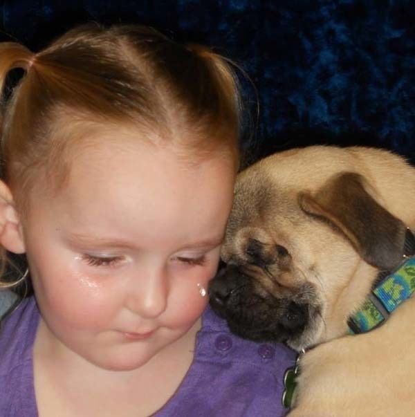 Blind Pug Brings Along Smiles Wherever He Goes! BEST. THERAPY DOG. EVER!