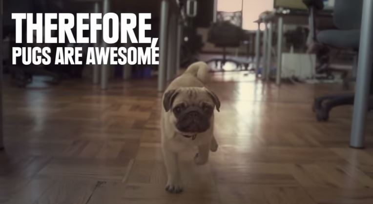 pug are awesome