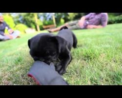 Three Minutes Of Pure Pug Happiness! Can You Handle The Cuteness?