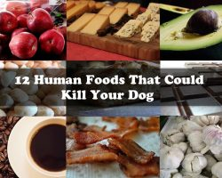 12 Human Foods That Could Kill Your Dog