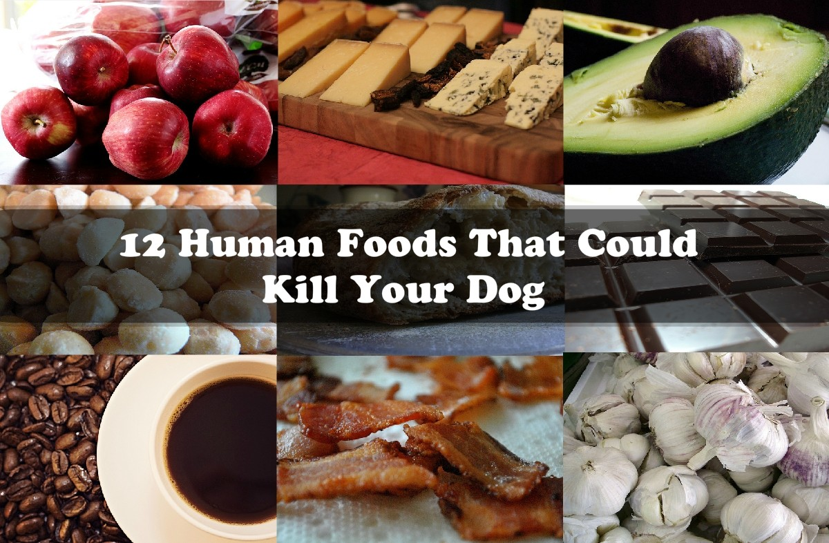Human Foods that Can Kill Your Dog