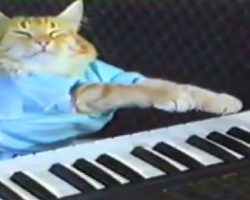 The Piano-Playing Cat