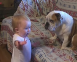 Baby Argues With Bulldog! Hilarious!