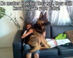 Hilarious Dog Owner Struggles!! Can You Relate? LOL