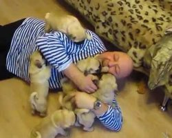Man Gets Attacked By Pug Puppies! Watch What Happens..