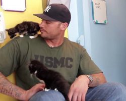 When These Giant Men Meet Kittens, It's PURFECT!