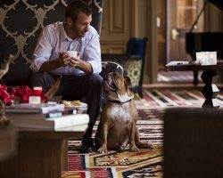 Want To Travel With Dogs? Here Are 9 Super Pet-Friendly Hotel Chains