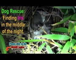 They Went To Rescue A Hurt Little Dog Hiding In A Bush. What They Found Was A Big Surprise.