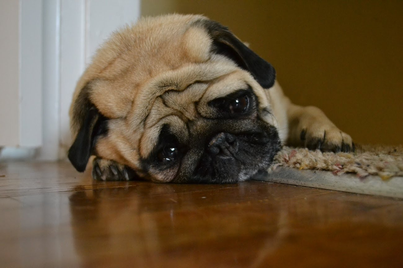 A Sad Dog's Diary… Is.. Well.. Hilarious!!!