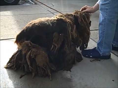 Cocker Spaniel Puppy Mill Survivor's Transformation Is INCREDIBLE!