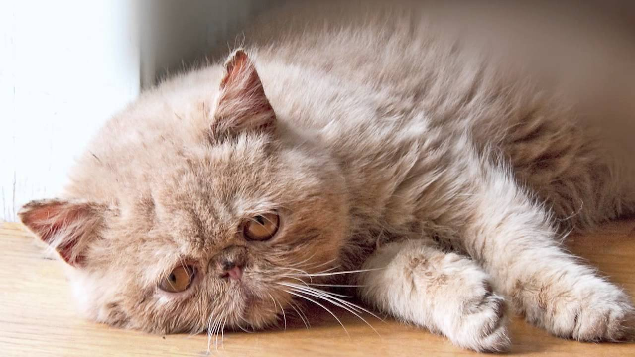 The Sad Cat Diary.. Is.. Well.. Hilarious!!