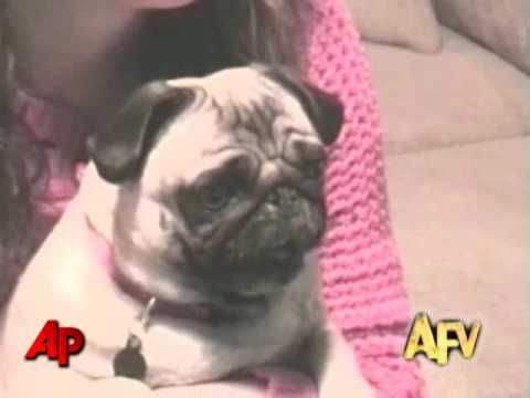 """America's Funniest Home Videos"" Animal Clips"