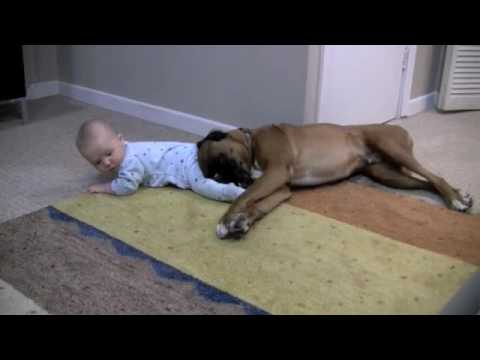 Boxer Loves His Baby [ADORABLE]