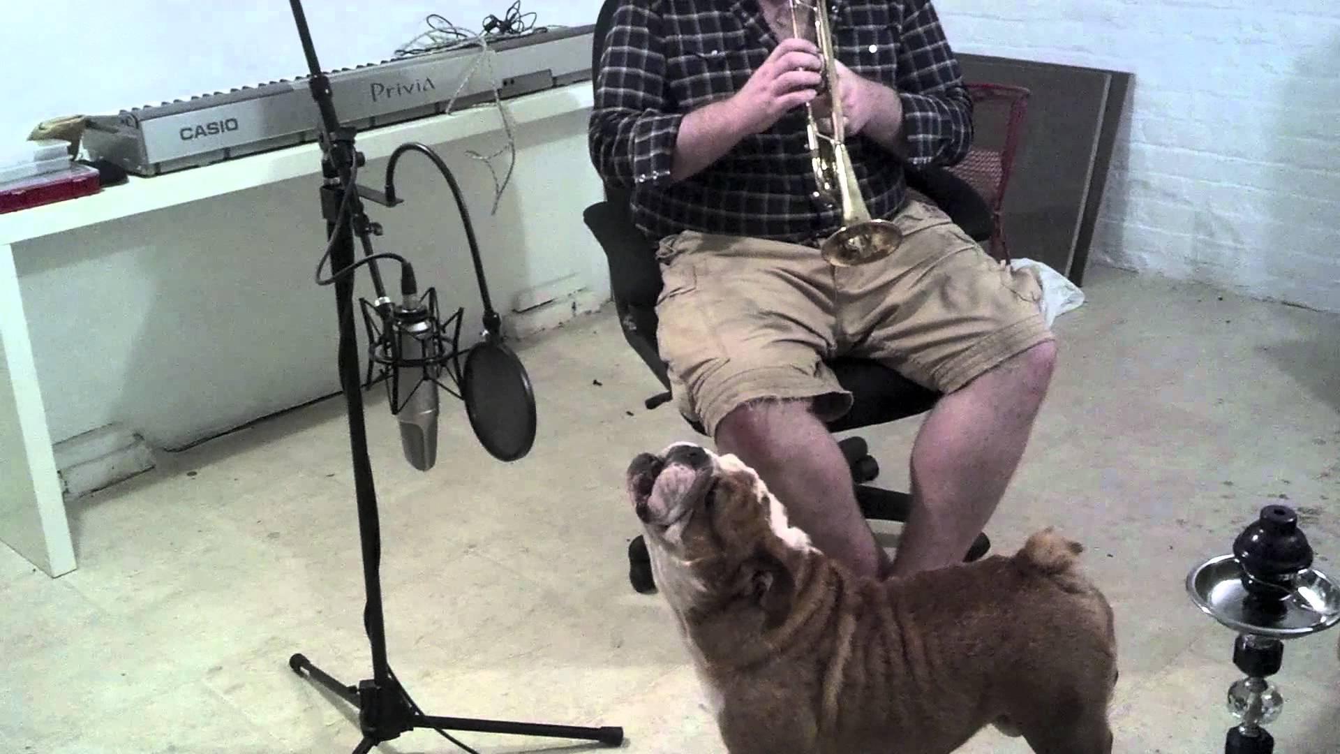 English Bulldog And Owner Duo Sings Happy Birthday