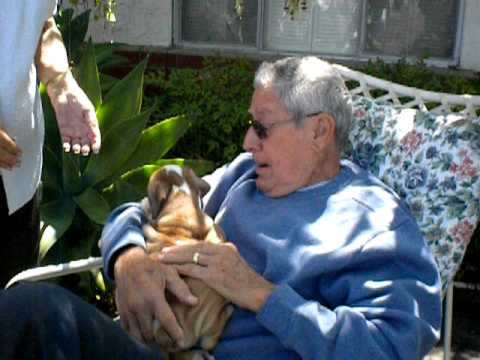 Grandpa Gets A Wrinkly, Little Bulldog Puppy! Surprise!!