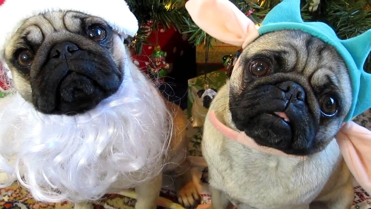 Santa Pug And The Dutiful Elf Pug
