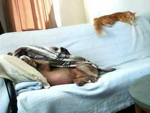 Dog Steals Cat's Blanket