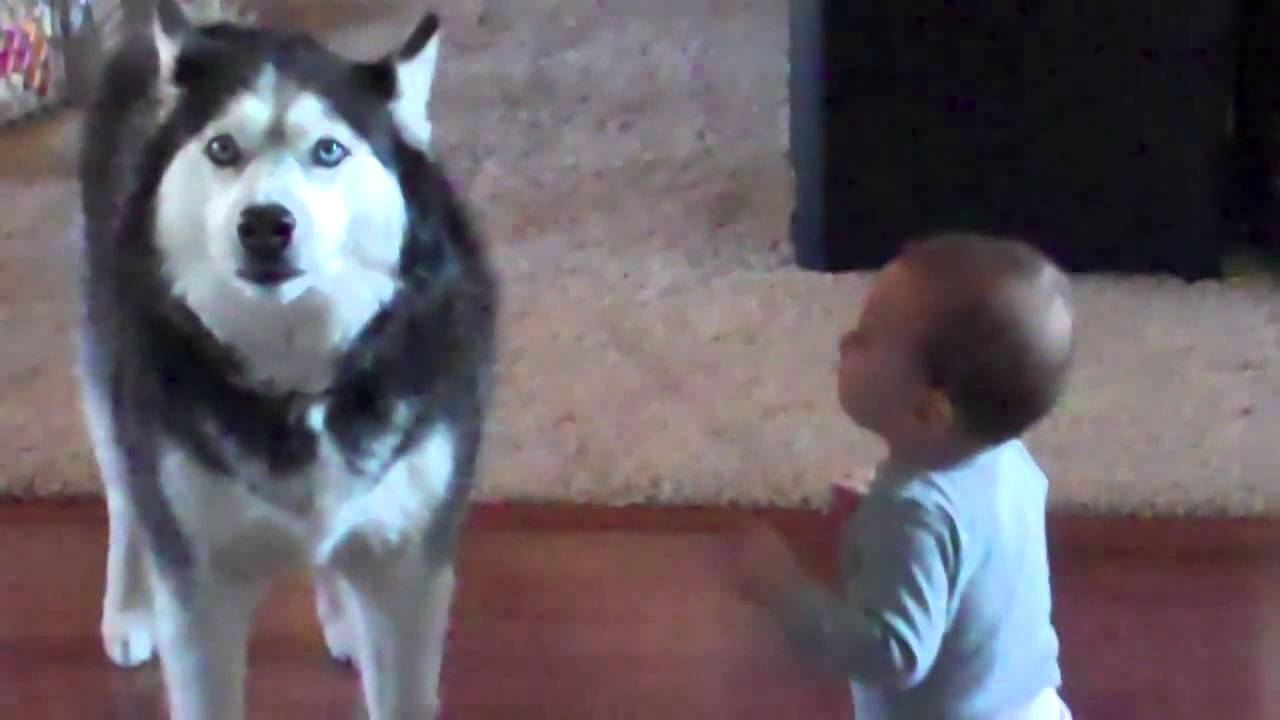 Mommy Catches Her Baby Talking To The Dog. His Reaction Is Adorable!
